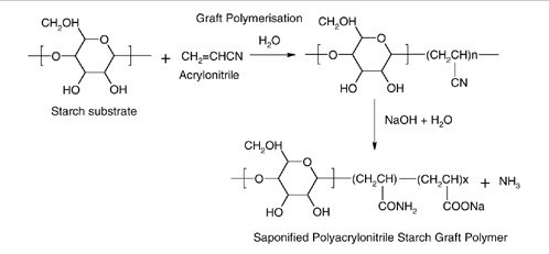 Synthesis of a starch-graft polymer.